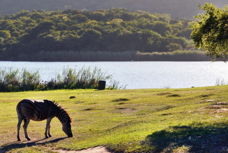 Wildlife on the Shongweni Dam