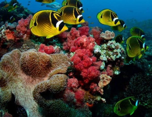10 reasons to celebrate Africa's first-ever Marine Protected Areas (MPA) Day